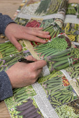 Order vegetable seeds in a catalog