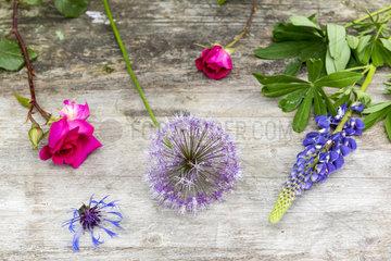 Floral assortment on a garden table  spring  Pas de Calais  France