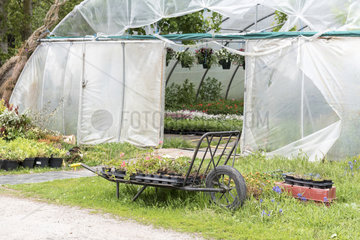 Greenhouse of various plants at a horticulturist  spring  Pas de Calais  France