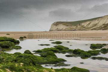 Cap Blanc-Nez in gray weather  summer  Pas de Calais  France