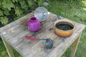 Decoction of nettles for the treatment of plants  summer  Pas de Calais  France