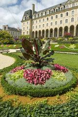 Red Abyssinian banana (Ensete ventricosum 'Maurelii')  Palais Saint-Georges garden  Rennes  Ille-et-Vilaine  France
