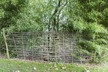 Bamboo palisade in a garden  autumn  Somme  France