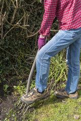 Garden cleaning in early spring  Pas de Calais  France.
