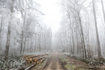Frosted trees on a forest path in winter  Moselle  France