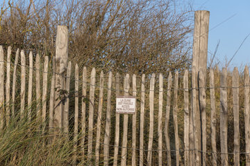 Use of chestnut lattice fences to protect the dune  winter  Wissant  France