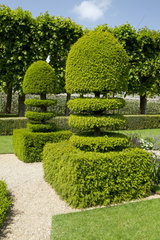 Common yew (Taxus baccata) in topiary in Gardens of Villandry Castle  France