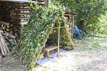 Small hut made of hazel wood  summer  Moselle  France