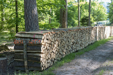 Stacks of Firewood  Beech Essence  Spring  Northern Vosges  France