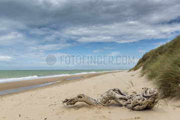 Driftwood on the beach  Sangatte  Côte d'Opale  France