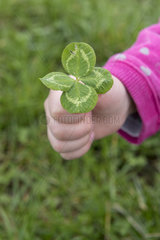 Four leaf clover in a girl's hand  spring  Pas de Calais  France