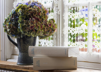 Bouquet of dried hydrangea in a vase  summer  Pas de Calais  France