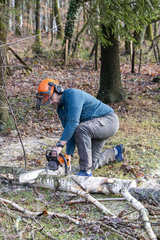 Slaughter and pruning of a birch in winter  Moselle  France