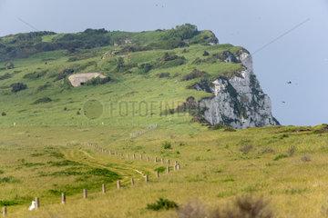 Cape blanc-nez  spring  Pas de Calais  France