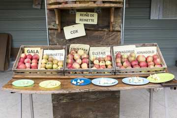 Stall of apple tasting in an orchardautomne   Pas de Calais  France