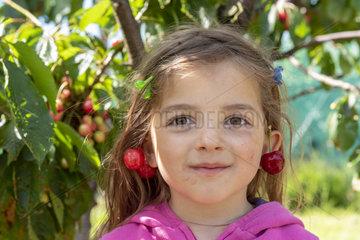 Pair of cherries bigarreau 'Burlat' in earring  spring  Pas de Calais  France