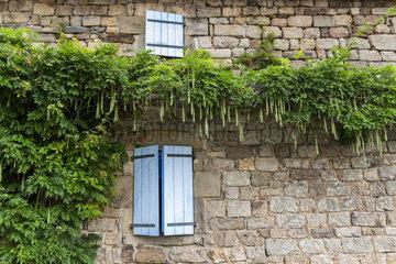 Wisteria fruit on a house facade  summer  Ardèche  France