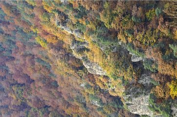 Autumn forest on steep slopes Valley Seuge France