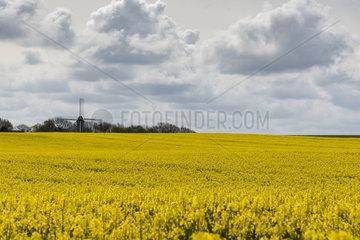 Mill and rape field  spring  Pas de Calais  France