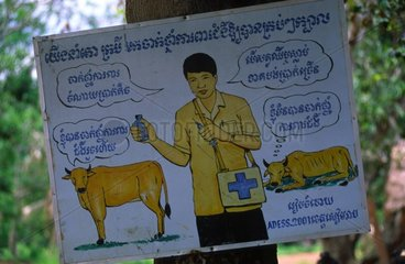 Vaccination campaign of the bovines Kampuchea