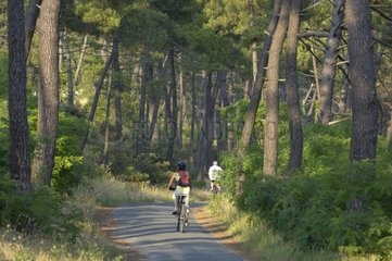 Cycle track in a coastal forest Charente-Maritime France