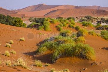 Dunes of Sossusvlei - Namib desert Namibia