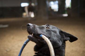 Dog holding a hoop - Hippodrome de Palermo Argentina