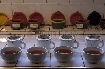 Samples of tea for tasting in Sri Lanka