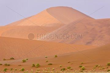 Sand Dune - Namib Desert Namibia