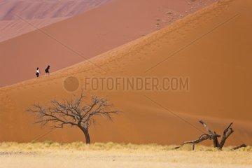 Dune 45 - Namib Desert Namibia