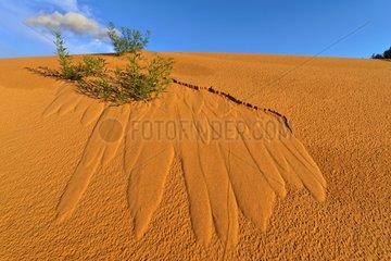 Sand Dune - Coral Pink Sand Dunes State Park Utah USA