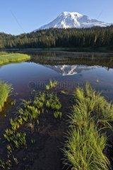 Stratovolcano in the Cascade Mountains - Mount Rainier NP USA