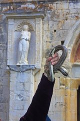 Presentations Snakes - Snakes Ceremony Cocullo Italy
