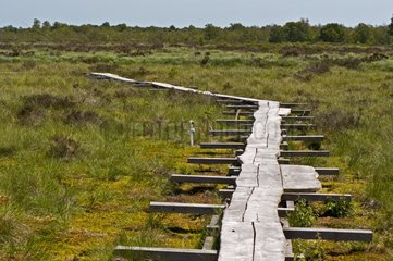 Boardwalk in a raised bog - Denmark
