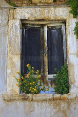 Wild flowers on window - Village of Cocullo Abruzzo Italy