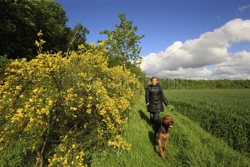 Woman walking her dog in the countryside - Picardy France
