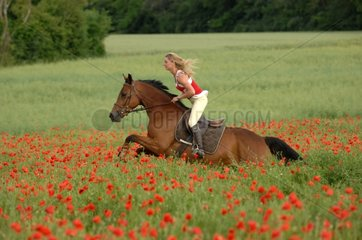 Rider woman on horse galloping in field of poppies - France