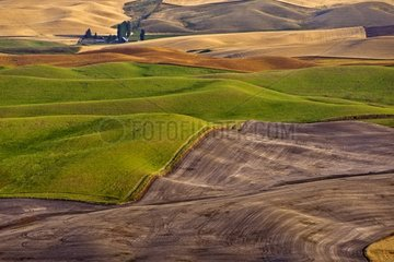 Loess hills planted with cereals and lentils -Washington USA