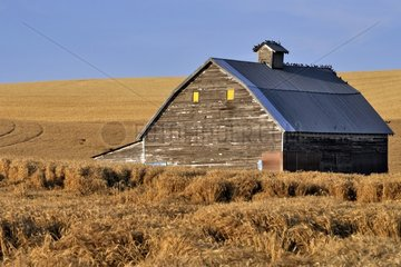 Barn on loess hill planted cerales - Washington USA