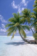 Idyllic shore in French Polynesia