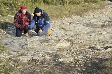 Naturalists have discovered footprints of Sauropod Dinosaurs