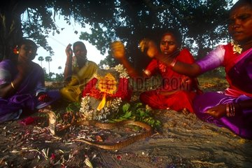 Femmes Irulas et Cobra lors de la Puja