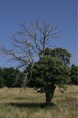 Tree in a natural district Pommier de Beaurepaire France