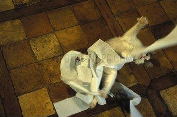 chaton jouant avec du papier toilette