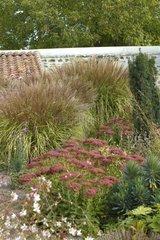 Stonecrap and Purple japenese silver grass France