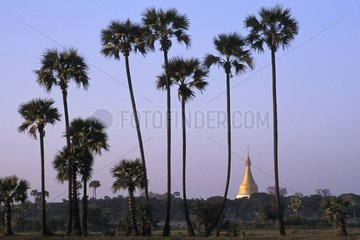 Gold bell-tower behind palm trees in Burma
