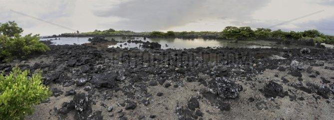 Lagoon at low tide Isabela Island Galapagos
