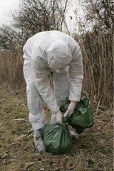 Isolement en sac double d'un cadavre de Faisan Ain