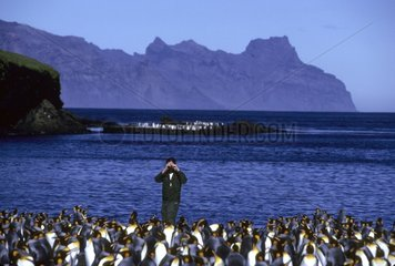 Observation with binoculars of a colony of King Penguins