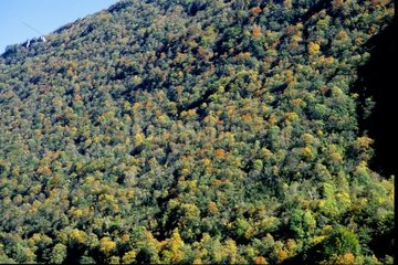 Colors of autumn for a forest in Franche-Comté France